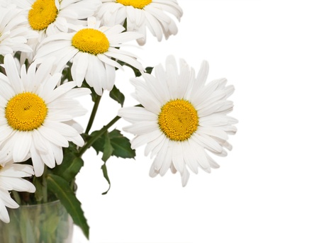 big daisy: chamomile flowers bouquet isolated on a white background Stock Photo
