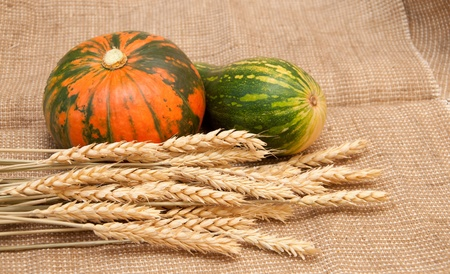 Pumpkins and wheat on a burlap background. Thanksgiving Harvest photo