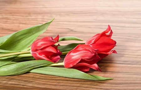 Three beautiful red tulips lie on the table  photo