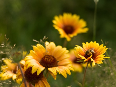 Beautiful yellow summer flowers background photo