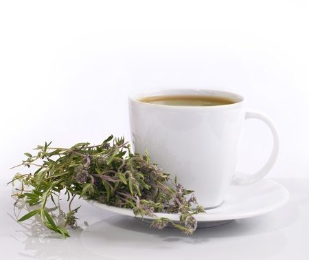 water thyme: the cup of herbal tea with thyme