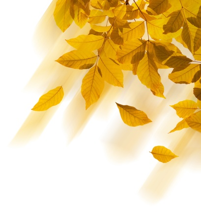 autumn leaves border on a white background photo
