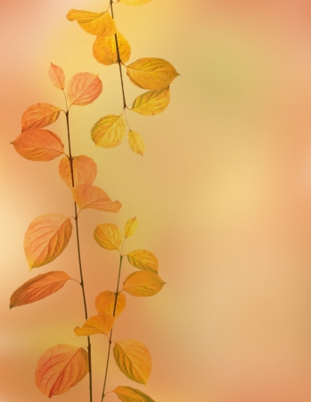 autumn branches and leaves border on orange background photo