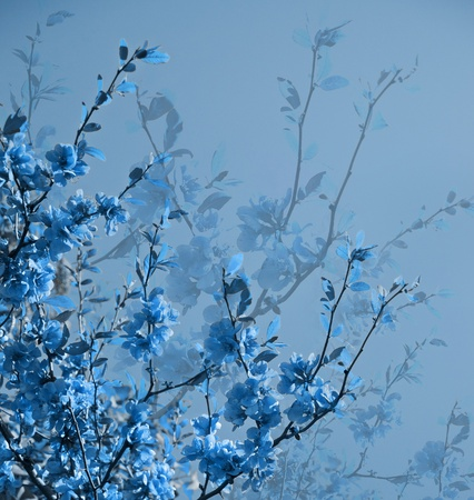 floral border: Abstract blue Flowers spring background