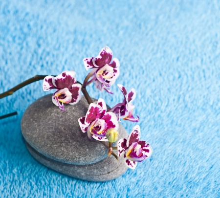 Spa stones and orchid on blue background photo