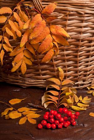 the autumn rowanberry and basket photo