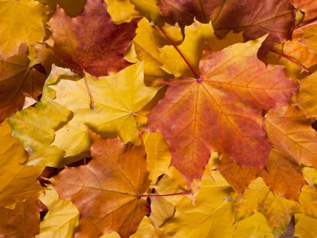 the colorful autumn leaves  photo