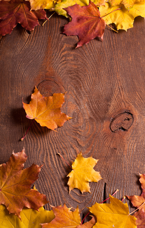the autumn maple leaves border on wooden background photo
