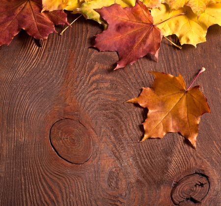 the autumn leaves border on wooden background photo