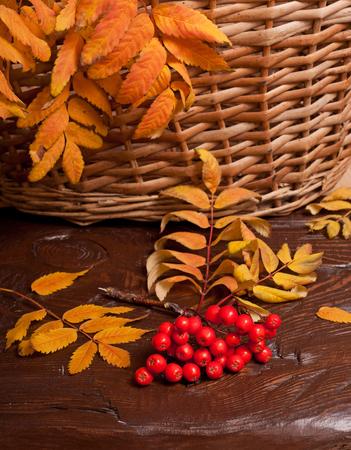 rowanberry: the autumn rowanberry and basket on wood