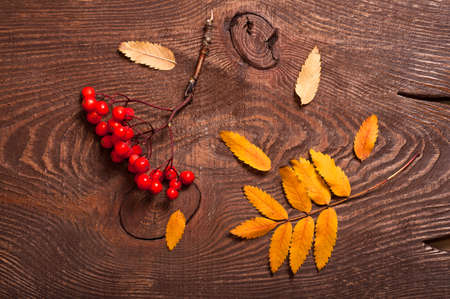 rowanberry: Autumn rowanberry and yellow leaves on wooden table