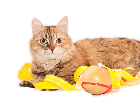 Tabby Cat and Christmas decoration on a white background photo