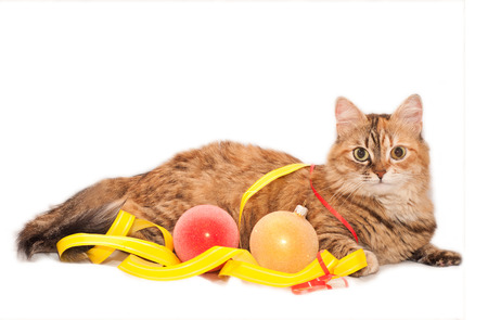 Cat and color Christmas decoration on a white background photo