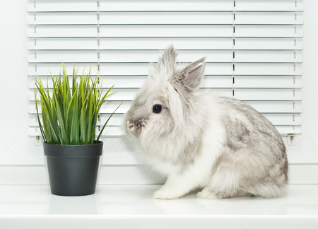 White decorative rabbit and green grass photo