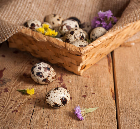 Quail eggs in basket and flowers. Easter concept photo