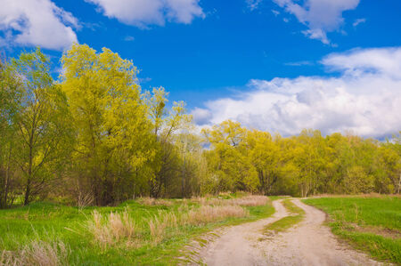 Dirt road towards the forest, beautiful spring landscape photo