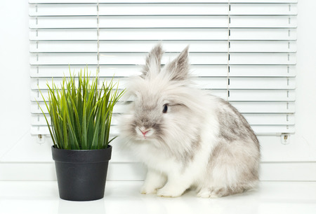 White decorative rabbit and green grass photo