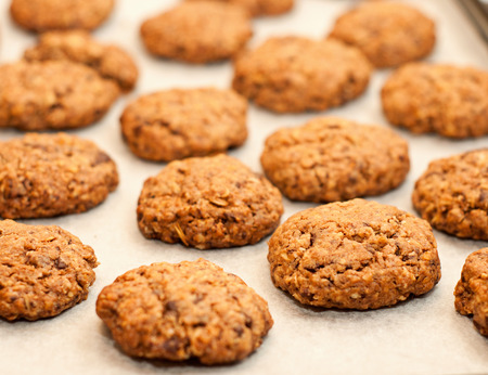 Homemade oatmeal cookies on parchment photo
