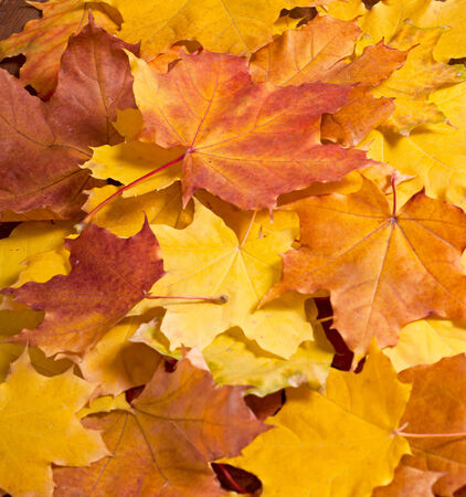 Autumn rowanberry yellow leaves on wooden table photo