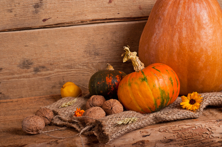 thanksgiving background: Pumpkins, walnut, quince, ear and burlap on wooden background