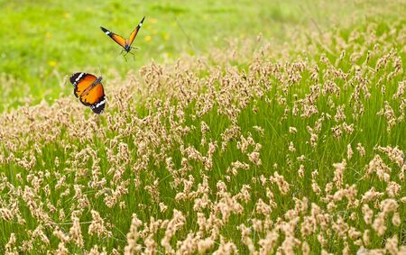 Spring meadow of green grass and butterflies photo