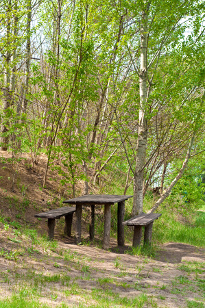 woden: Woden table and bench in birch grove