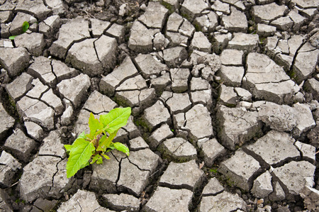 waterless: green sprout in the dry ground, will to live concept