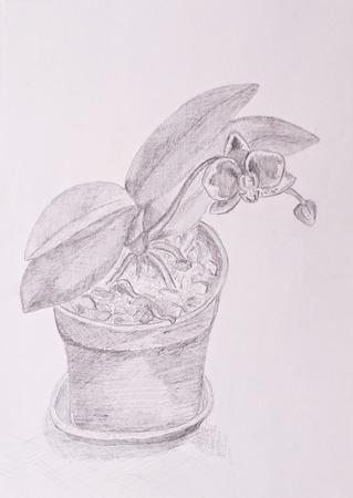 flowerpot: Handdrawn orchid flower in flowerpot, black and white image