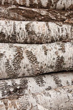firewood background: The birch firewood background, texture of raw materials