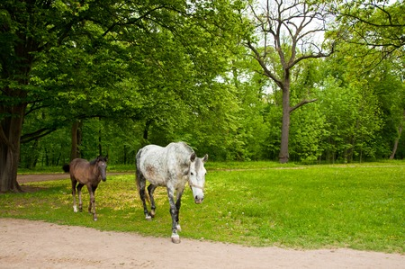Mare and her foal going out of the forest