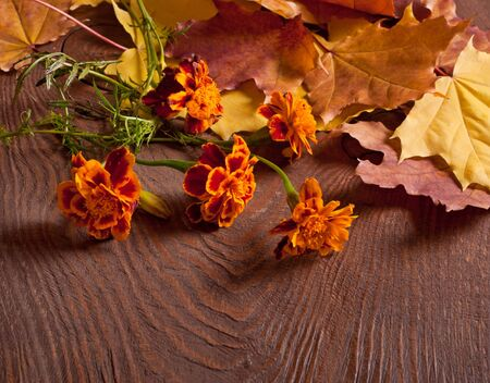 tagetes: Tagetes flowers and Autumn leaves on wooden background Stock Photo