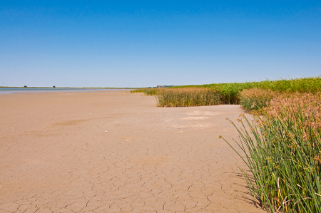 suelo arenoso: The green grass in the dry ground on the coast. Ecology concept. Foto de archivo