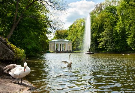 Beautiful swans on the lake in National dendrological park Sofiyivka, Uman, Ukraine Stock Photo