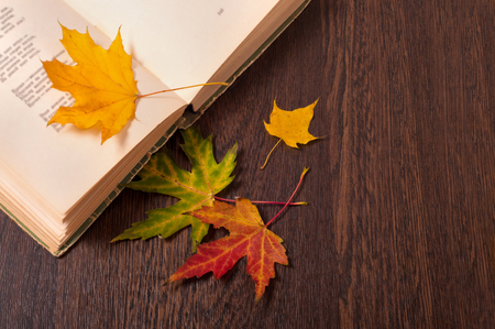 Opened book and colorful autumn leaves on wooden table