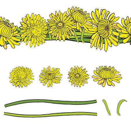 Vector set with yellow dandelions isolated on a white background and patterned brush. Illustration Stock Illustratie