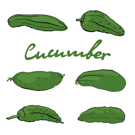 Set of cottage cucumbers isolated on white background. Vector. illustration Illustration