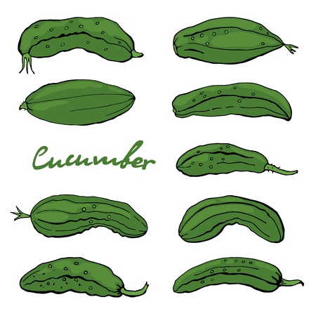 Suburban green cucumbers, isolated, on a white background. Vector. Illustration Ilustração