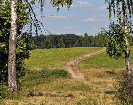 walking paths: trees and walking paths Stock Photo