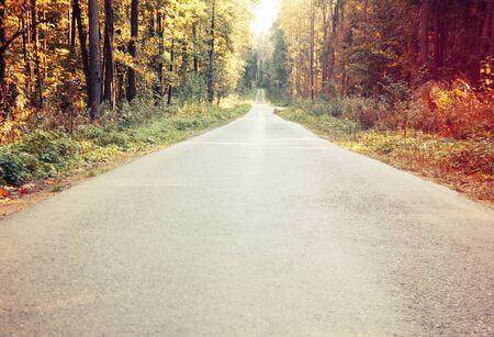 明るい秋の風景。林道沿いの紅葉 写真素材