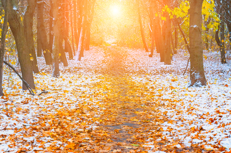 Picturesque landscape of the sun above the road. The path in the forest covered with the first snow. With blurred and bright sunlight. Stock Photo