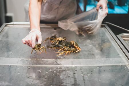 Live crayfish in the store. Selection, selection and sale of crayfish. Crustacean storage, trade Stock Photo