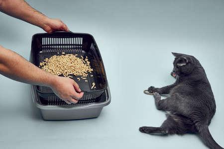 New gray, empty cat tray. Tray filler, biodegradable cat litter. Toilet for the cat. Reklamní fotografie