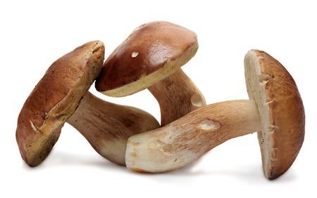 흰 배경에 고립 된 boletus edulis입니다. 사나운 버섯 스톡 콘텐츠