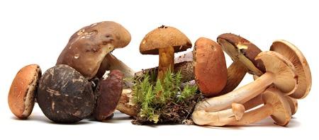 Wild Foraged Mushroom selection isolated on white , with shadow. Boletus Edulis mushrooms over white
