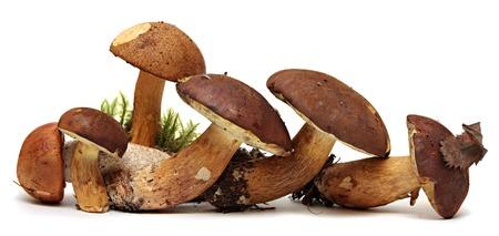 fungi woodland: Wild Foraged Mushroom selection isolated on white , with shadow. Boletus Edulis mushrooms over white