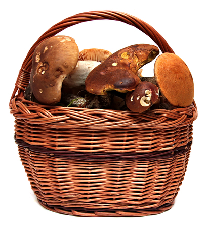 fungous: Basket of wild mushrooms isolated on a white background.