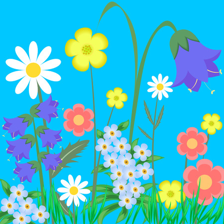 ox eye: EPS10 vector illustration. wild flowers.