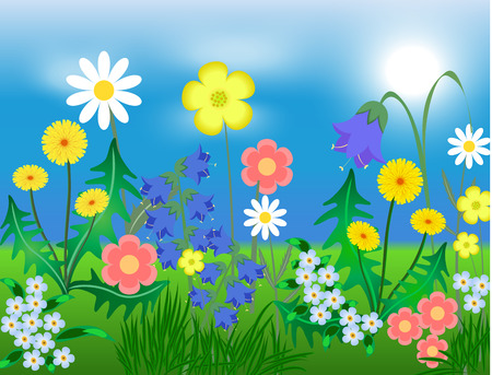 ox eye daisy: EPS10 vector illustration Bright wild flowers against the sky and a grass Illustration