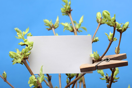 hopefulness: message written on a white card hanging on a green leafy branch by a wooden clothes peg. Stock Photo