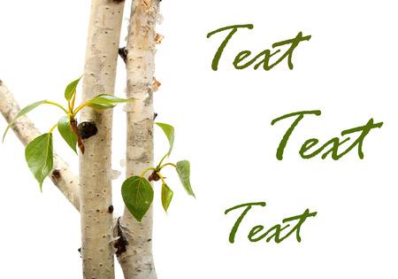 나뭇 가지와 녹색 잎 프레임 흰색 배경에 고립. 자작 나무 스톡 콘텐츠